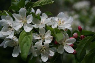 Arboretum 028