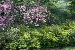 Arboretum 026