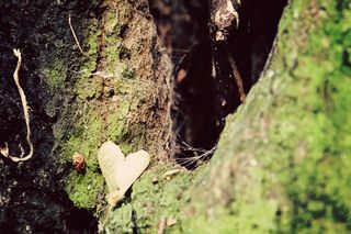 Heart in Forest